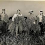 harvest1943